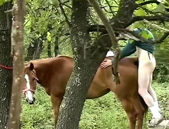 Молоденький баловник пялит кобылу в пизденку zoo фильм в лесочке